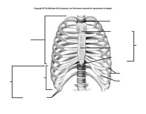 thoracic cage diagram thoracic cage labeling purposegames