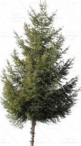 3d pines conifers download free hephaestusit com