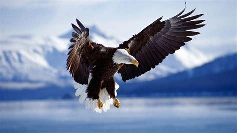 coming in for a landing ten years flying in the islands books hoe een adelaar worden