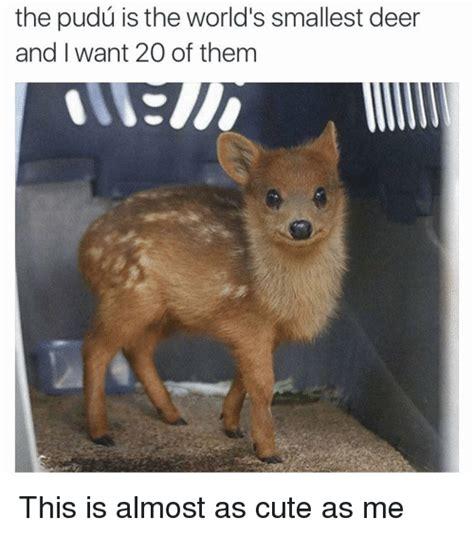 deer memes deer memes of 2017 on sizzle animals