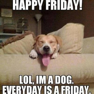 Friday Dog Meme - happy friday fuzzness feathers pinterest