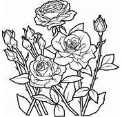 Cvijece Bojanka Cvijeće  Bojanke Za Djecu Printanje I Bojanje