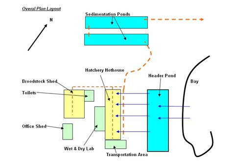 layout of shrimp hatchery coral trout aquaculture