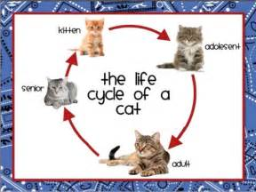 cats life stages felis catus world