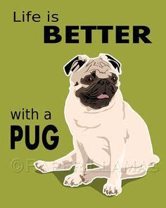 tell me about pugs 1000 images about pugs on and sibling