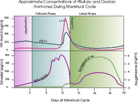 mood swings and ovulation menstrual cycle hormones mood