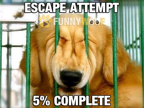 what to do with puppy when at work all day top escape work meme images for tattoos