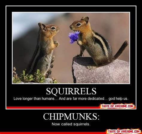Chipmunk Meme - 50 most funniest chipmunk pictures and photo