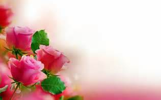 roses wallpaper hd