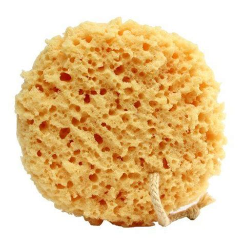 Shower Sponge Thing by 17 Best Ideas About Bath Sponges On Psp4 Price