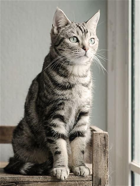 a cat getting a cat buying a new cat purina