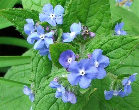 Singing The Garden Blues Blue Garden Flowers