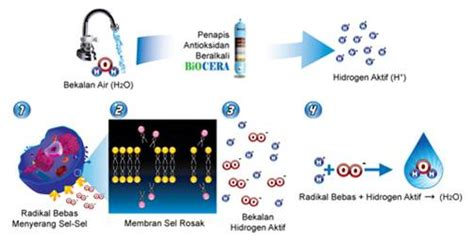 Air Hidrogen Dynamic Antioxidant Water ibnu rashid air aa