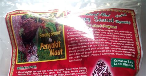 Sarang Semut Asli Herbal Kalimantan khasiat sarang semut simplisia asli papua