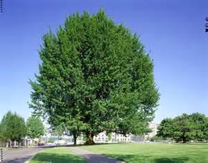 Fall Gardening In Oklahoma - street trees are money trees oklahoma gardener web articles