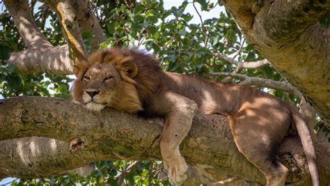 queen elizabeth national park uganda wildlife queen elizabeth national park uganda