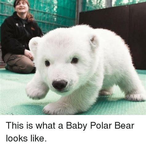 that looks like a polar e this is what a baby polar looks like meme on sizzle