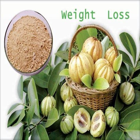 weight loss herbs top 5 weight loss herbs healthy weight loss news