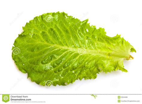 fresh salad leaf stock photo image of texture details 3534408