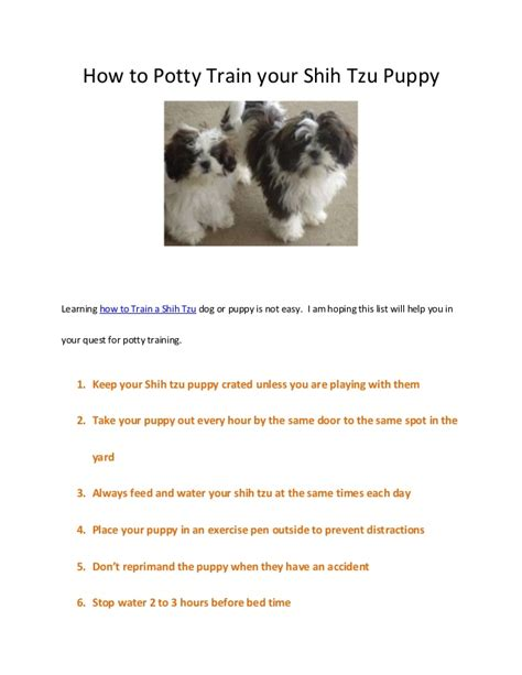how to get your potty trained how to potty your shih tzu puppy