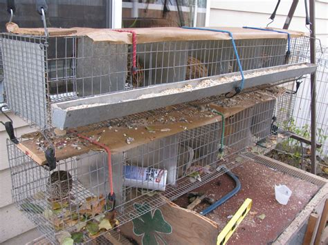 raising quail in your backyard image gallery homemade quail cages