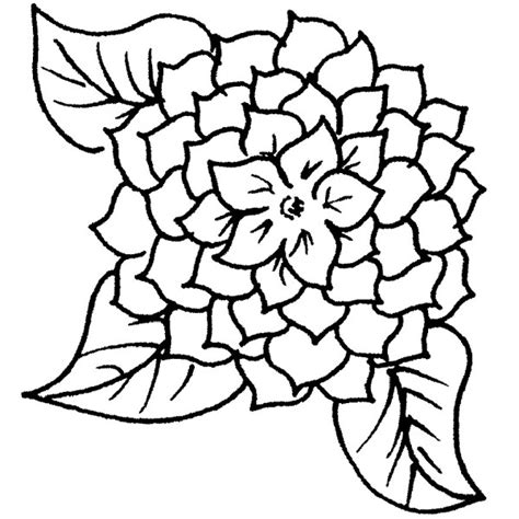 coloring pages zinnia zinnia flowers drawing