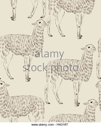 sketchbook lama llama picture stock photos llama picture stock images