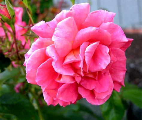 August 3, 2008   Flowers in Poulsbo