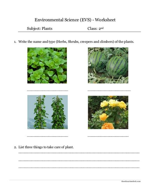 two against the sea tasks for vegetation science books environmental science evs plants worksheet class ii
