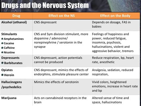 section 35 5 drugs and the nervous system presentation 16 nervous system