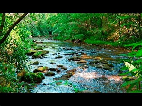 imagenes relajantes con sonido sonidos del bosque relajantes con agua y animales para