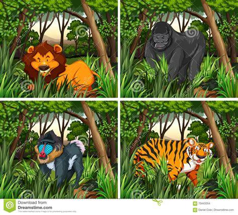 imagenes animales que viven en el bosque animales de wid que viven en el bosque ilustraci 243 n del