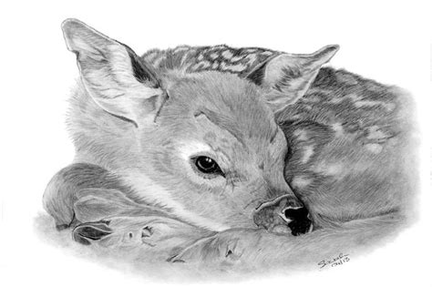 Kaos Animal Sketch 22 fawn with graphite and carbon pencils size a4 the original drawing is for sale cards