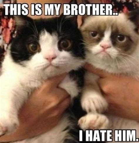 Meme Kitty - 27 best grumpy cat memes images on pinterest grumpy cat