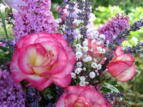 imagenes de lindas rosas fotos lindas de flores imagui