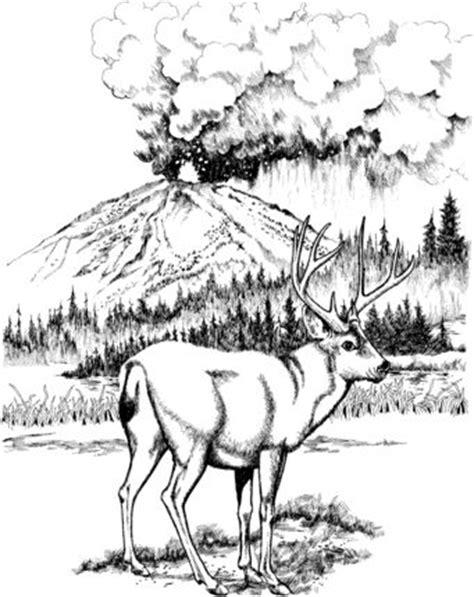 click   printable version  mule deer  lassen