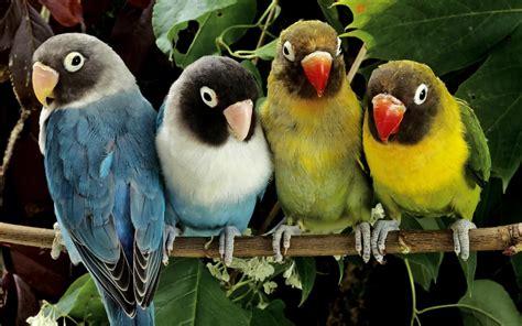 4 the love of go l d papegaaien achtergronden hd wallpapers