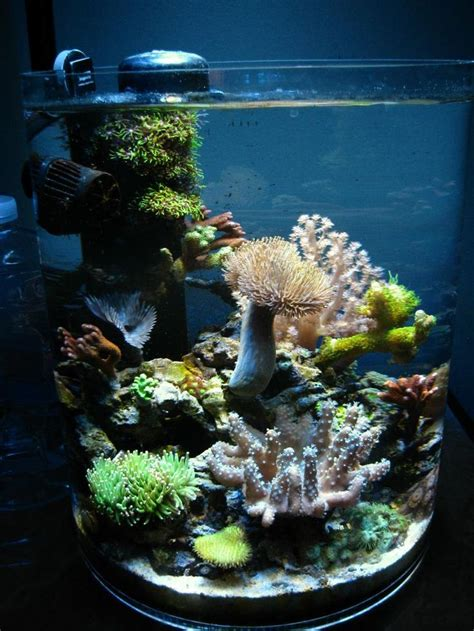 Olearys Nano by 268 Best Images About Nano Reef Aquariums On