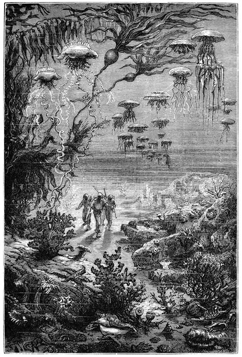 Underwater Landscape – Old Book Illustrations