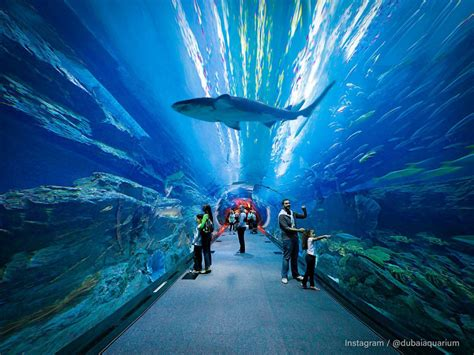 Household Gifts by Dubai Aquarium Amp Underwater Zoo Downtown Dubai