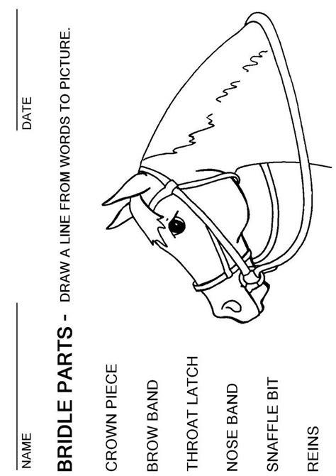 bridle parts worksheet horses