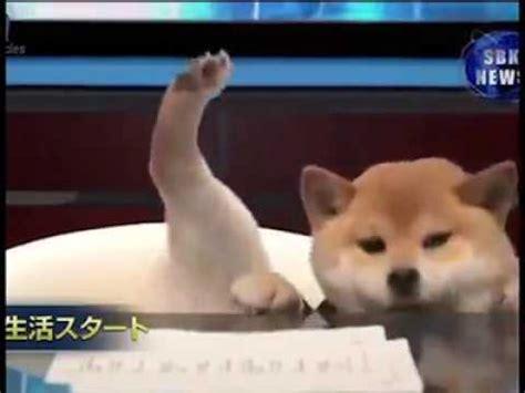 puppy news japan news anchor