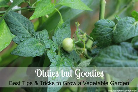 best vegetable garden oldies but goodies the best tips and tricks to grow a