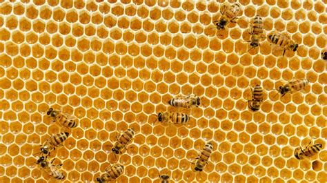 patterns in nature honeycomb what is it about bees and hexagons krulwich wonders