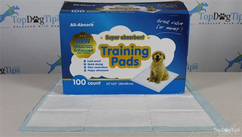 why is my potty trained dog peeing in the house best puppy potty training pads comparison test all absorb vs paw puppy potty