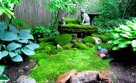 images of backyard gardens backyard moss garden www imgkid com the image kid has it