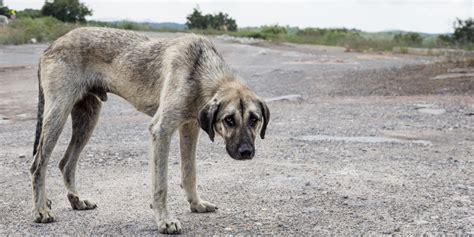 imagenes de animales maltratados maltrato animal antesala de la violencia social