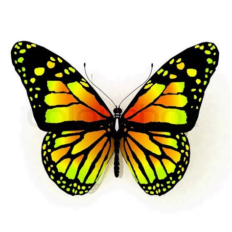 butterfly colors isolated butterfly of yellow color on a white background