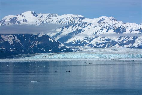 Hubbard Glacier images   The Greenery
