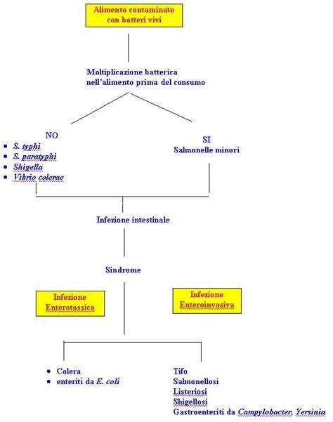tossinfezione alimentare intossicazioni e tossinfezioni alimentari